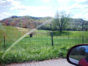 Kentucky in spring. Almost to Penn's Store.